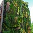 Jardines verticales como sistemas de enfriamiento pasivo en edificio