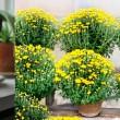 Cómo limpiar el aire de casa con plantas