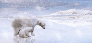 Situación del polo norte y deshielo del casquete polar