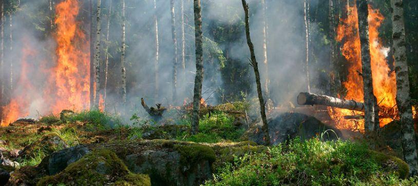 La biomasa ayuda a prevenir los incendios
