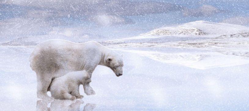 Situación del Polo Norte